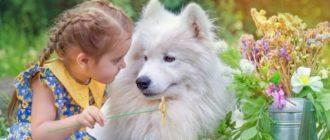 Список самых популярных собак для детей